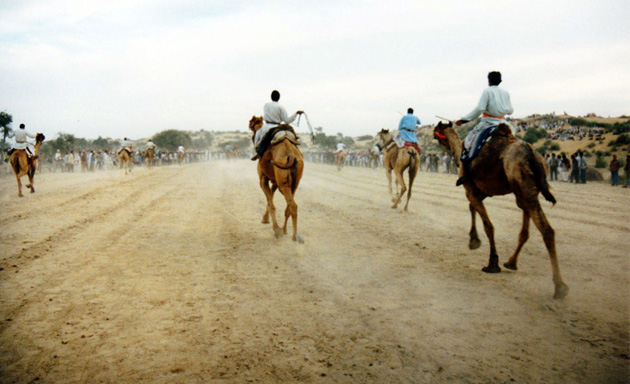 camel racing in India
