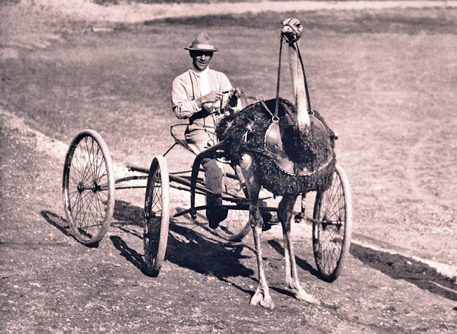 About Ostrich Racing